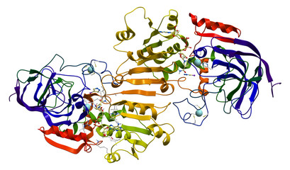 Human alcohol dehydrogenase (ADH1A)