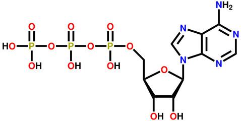 Adenosine triphosphate (ATP) structural formula