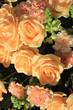 Soft orange roses and carnations