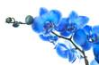 Fototapeten,orchid,blau,blume,schönheit