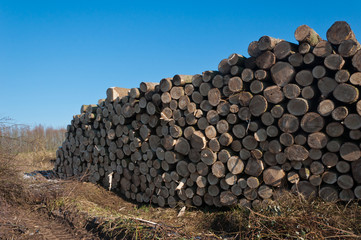 Stack of logs in the field