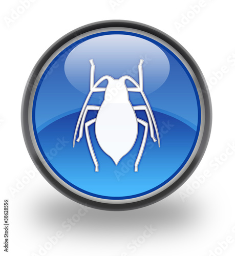 Insects glossy button
