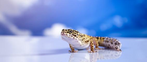 Gecko in a blue sky background