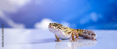 Gecko in a blue sky background