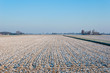 The first snow on the Dutch fields