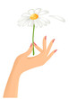 Female hand with camomile
