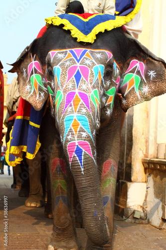 Elephant. India, Jaipur, state of Rajasthan. - 38636997