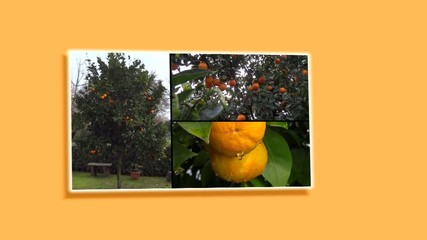 collage di arance