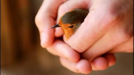Free bird.