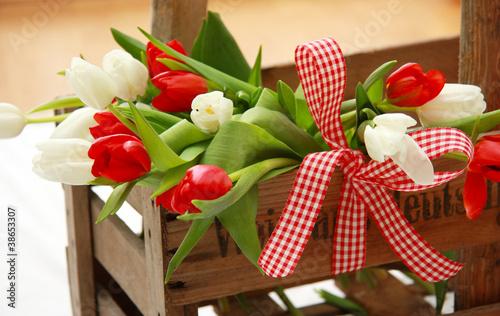 Tulpen rot/weiß