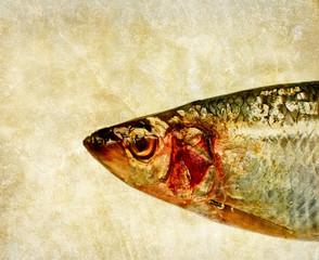 herring fish head