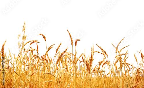 Wheat - 38658382