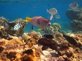 Fototapete Korallen - Meer - Fische
