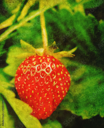 summer strawberry print