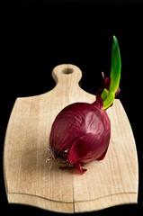Cipolla rossa con germoglio su tagliere 3