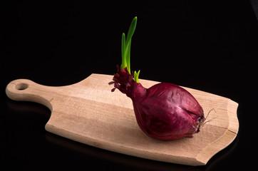 Cipolla rossa con germoglio su tagliere 4