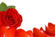 Rahmen aus Rose und Blütenblättern