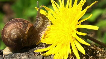 snails close-up