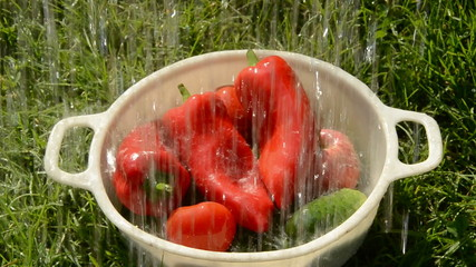 washing summer vegetables on grass