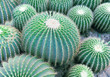 view of a cactus