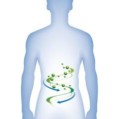 Sanfte Medizin im Verdauungstrakt - Infografik