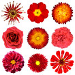 Collection of Red Flowers Isolated on White