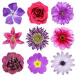 Various Pink, Purple, Red Flowers Isolated on White