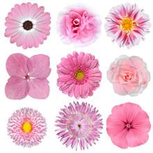 Kolekcja różowy biały kwiatów izolowanych na białym