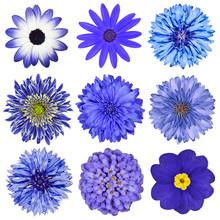 Różne Niebieski Wybór kwiatów izolowanych na białym