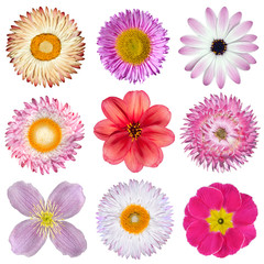 Various Pink, Red, White Flowers Isolated on White