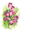 Watercolor -Tulips Bunch-