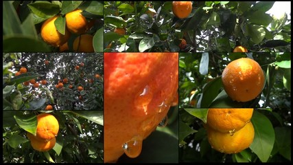 arance collage split screen
