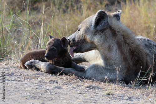 Papiers peints Hyène Mother Hyena Licking Her Pup