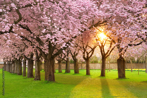 Fridge magnet Faszinierende Frühlingsszene bei Abendsonne