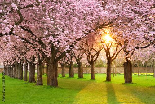 Plakat Faszinierende Frühlingsszene bei Abendsonne