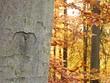 Herzlicher Baum im Herbst