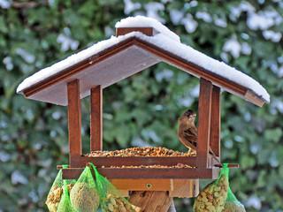 Spatz im Vogelhäuschen