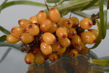 Fruits of sea buckthorn, Latin. Hippophae