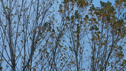 Fallng leaves