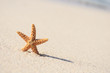 starfish in vacations