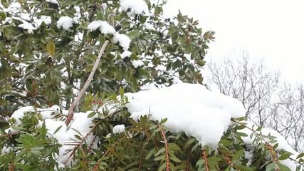 neve su alberi