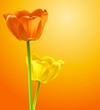 Flower background, vector tulips