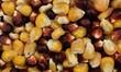 Gelber und roter Mais