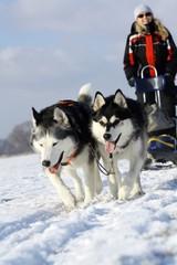 Wintersport mit Schlittenhunden