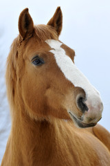 Cavallo pezzato