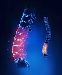 Lumbar spine anatomy in blue detail