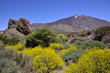 Mount Teide at Canary island