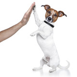 dog high five with male hand - 38746352