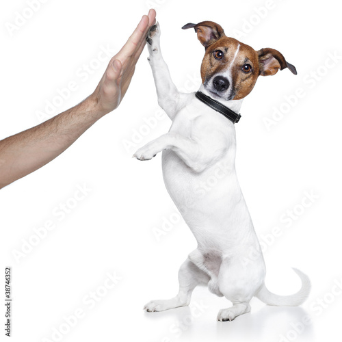 dog high five with male hand