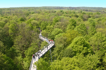 Baumkronenpfad - Forest